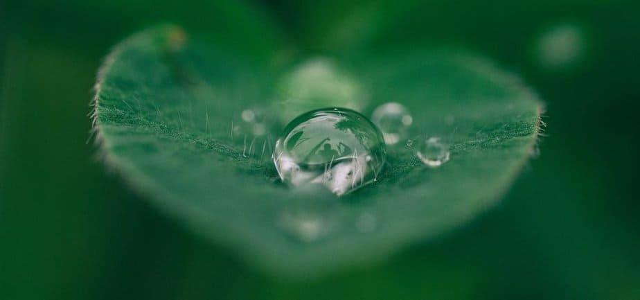 Der grosse Vorteil von Regenwasser