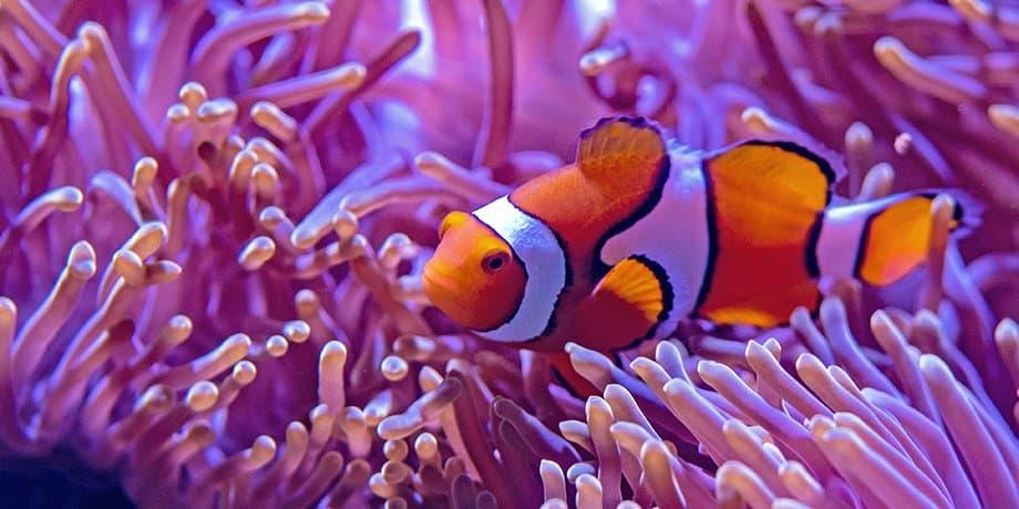Auch Fische mögens weich