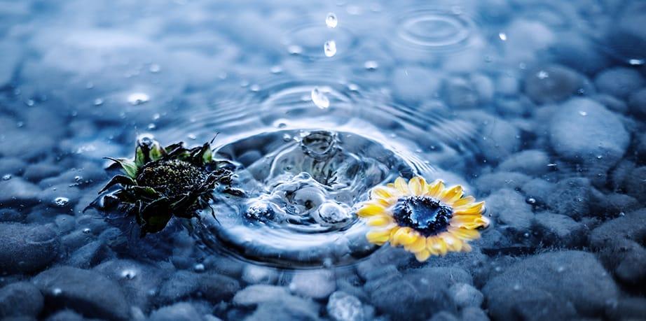Von der Chemie des Wassers